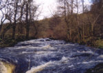 River Carron - Trout fishing