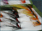 Cascade and Black Boar Salmon Fly