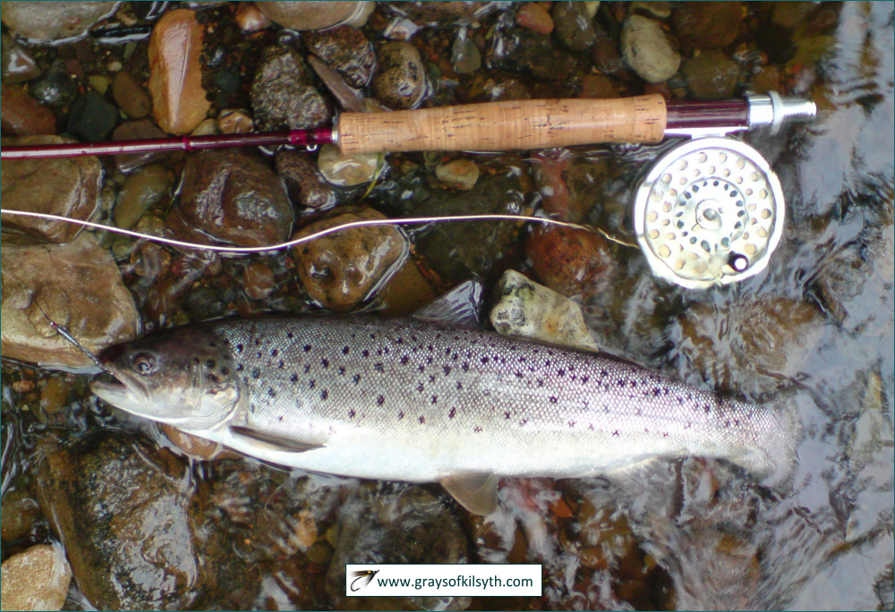 fly fishing articles, Fly Fishing Bait