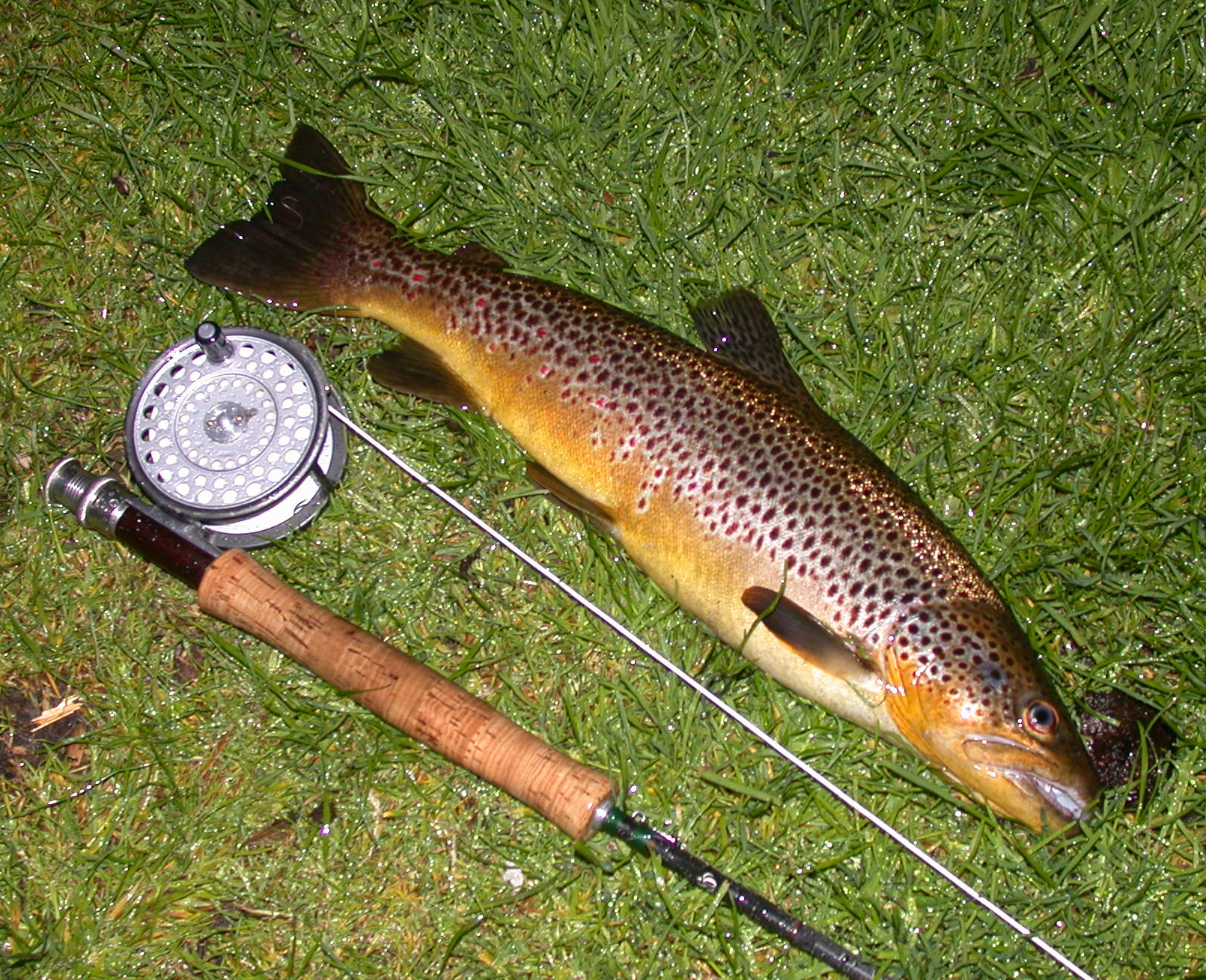 Fly fishing news for How to fish for trout in a river