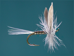Trout Dry Flies